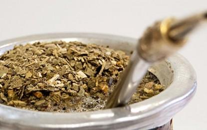 Yerba mate, importante  fuente de antioxidantes