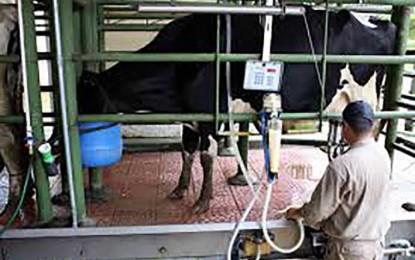 Los costos están por encima del precio de la leche