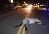 Once heridos, uno de gravedad, en siete accidentes de tránsito