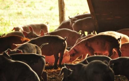Bienestar animal y productividad