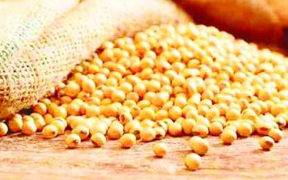 Las semillas, en el centro del debate