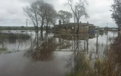 """""""Pescan mojarras en la avenida"""""""