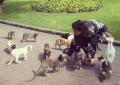 Felinos de calle y plaza