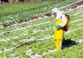 Se incrementó un 50% el consumo de fertilizantes