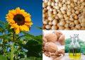 Fitoesteroles: el arma secreta contra el colesterol