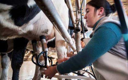 La producción lechera cayó un 10% durante 2016