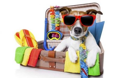 ¿Cómo llevo a mi mascota de vacaciones?