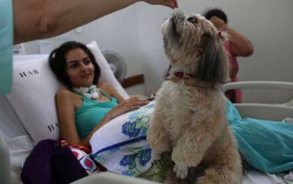 """Los perros """"enfermeros"""" que conquistan Brasil"""