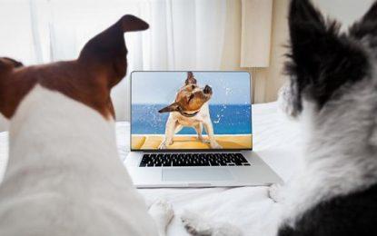¿Qué ven los perros en la tele?