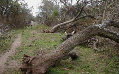 Desde Villa María, el país defiende los bosques de la provincia