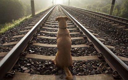 Esperó en las vías durante seis años