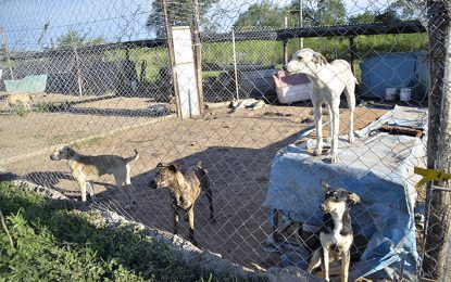 Vándalos robaron en albergue de perros y abrieron todos los caniles