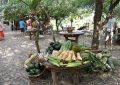 Un mercado justo y ecológico como alternativa al sistema