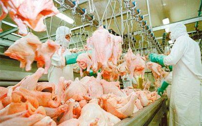 Cayó la producción aviar