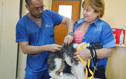 Mascotas bajo vacunas