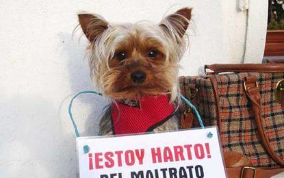 Se viene una marcha contra el maltrato animal