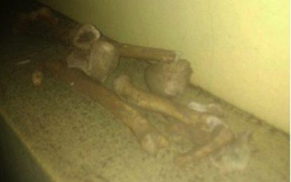 Hallaron restos óseos en zanjeo