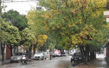 Un 34% de los 880 árboles con que se inició la reforestación son fresnos