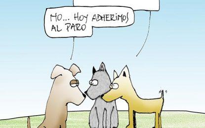 Humor Entre Perros y Gatos