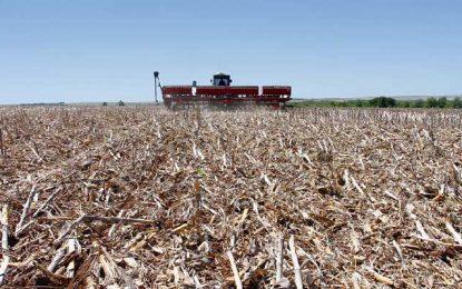 El maíz antes que la soja, para evitar degradar aún más los suelos chaqueños