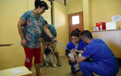 El municipio inmunizó de forma gratuita a 466 mascotas