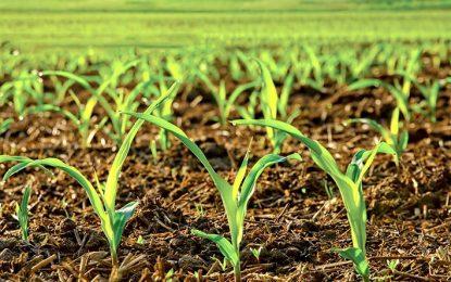 Conservar suelos