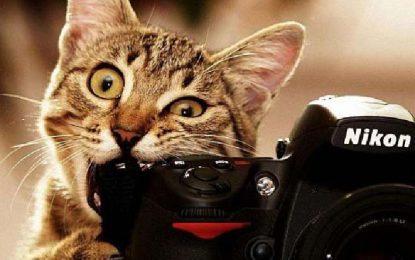 Los gatos corresponsales