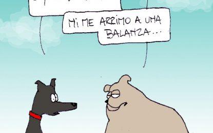 Humor mascotas