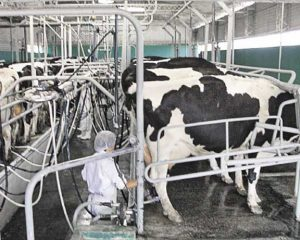 Se consolida el aumento de la producción láctea