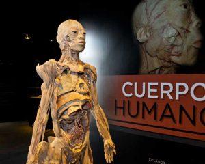 """Arriba a Córdoba la muestra """"Cuerpo humano"""""""