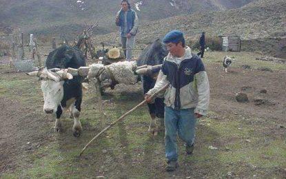 Los intereses detrás de la represión a los mapuches