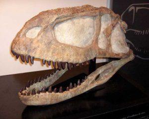 Réplicas de fósiles con más de 70 millones de años se verán en el Parque de la Vida