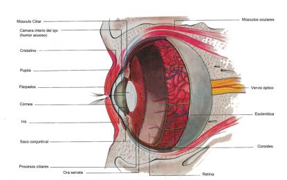 La principal causa de disminución visual corregible