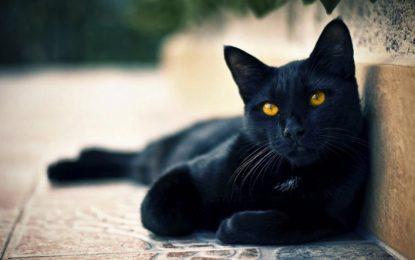 """¿De dónde viene la """"mala suerte"""" de los gatos negros?"""
