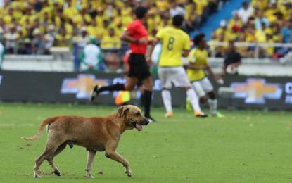 Un perro entre Colombia y Brasil