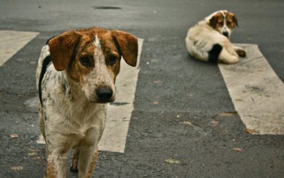 Holanda, el primer país sin canes abandonados sin sacrificarlos