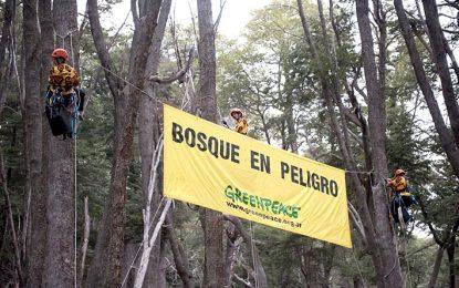 Concientizarán sobre la deforestación