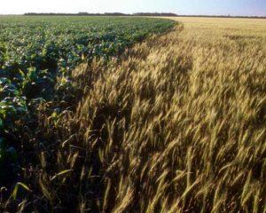 Estiman que esta cosecha será la mejor en la historia de Córdoba