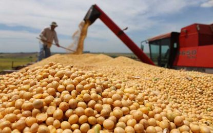 Más semillas fiscalizadas