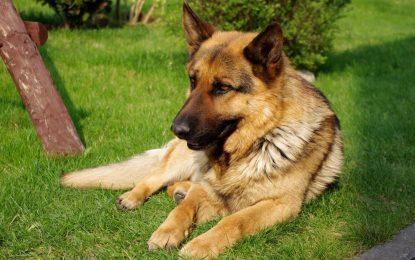El perro fiel