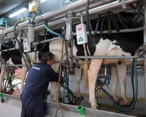 Pedido de infraestructura urgente para la lechería
