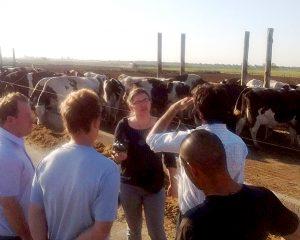 """Un collar que hace """"hablar"""" a las vacas lecheras"""