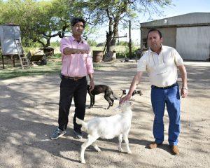 Cría de cabras: más rentable que en zonas tradicionales