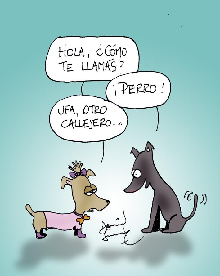 Humor Perros y Gatos | El Diario del Centro del País